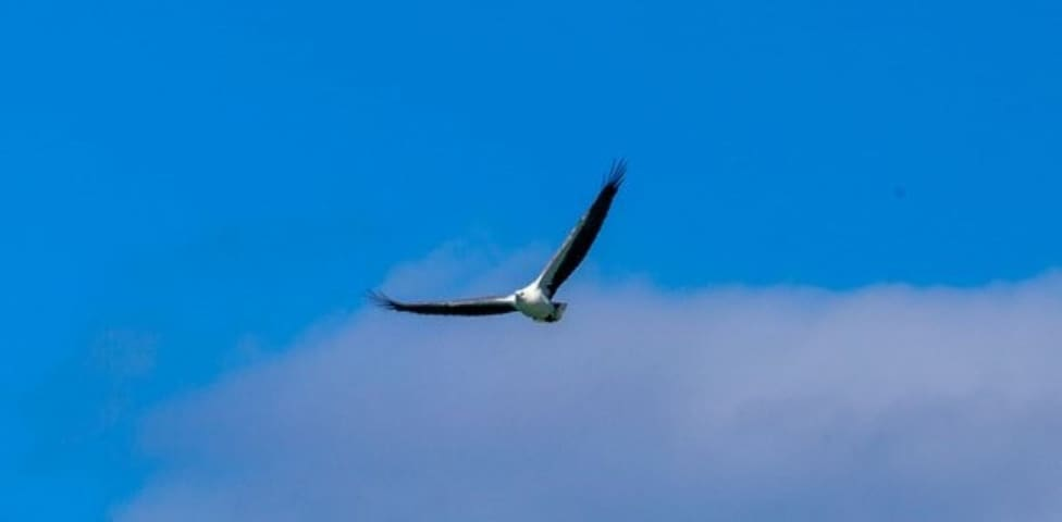 A sea eagle hovers over the beach looking for fish (beach fishing for humans is great too!)