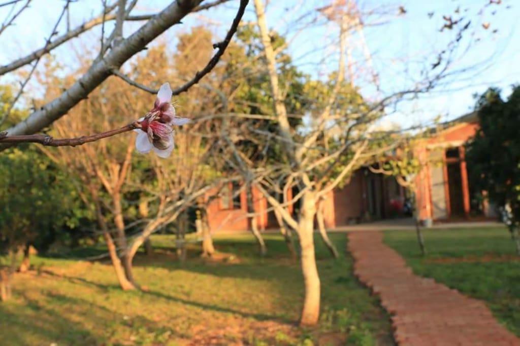 門前紅磚小徑 - 桃花掩映自在的美
