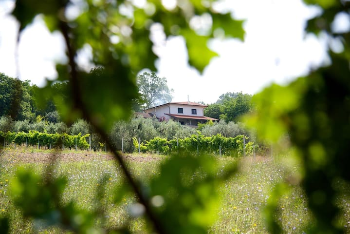 Olive Branch Inn - Melito Irpino - Bed & Breakfast