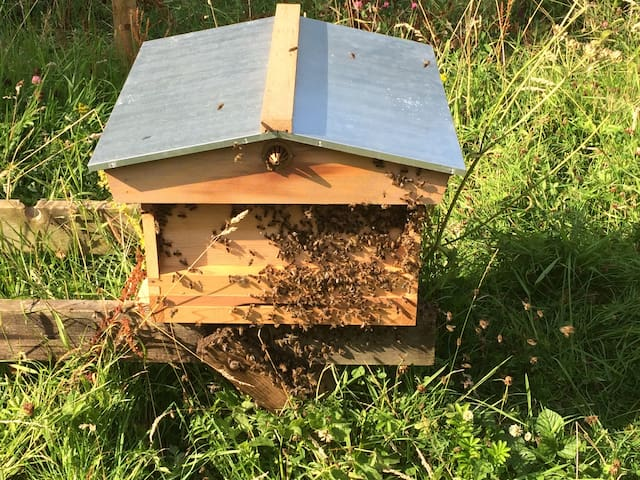 Honey bees @ Mount Briscoe