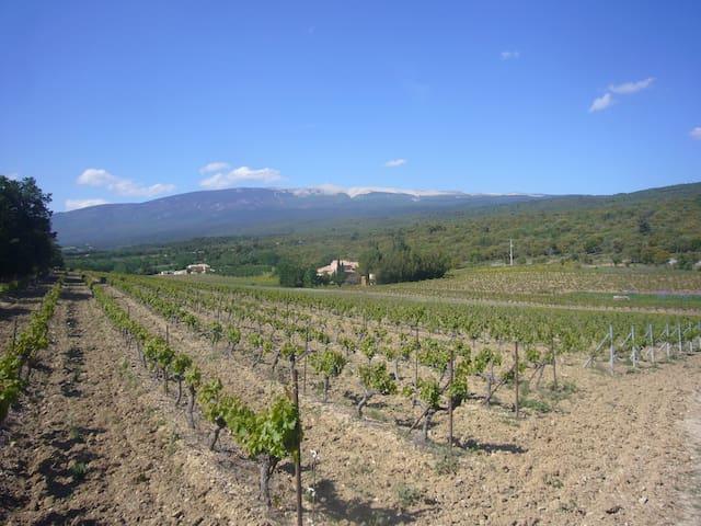 la campagne au pied du mont Ventoux - Villes-sur-Auzon