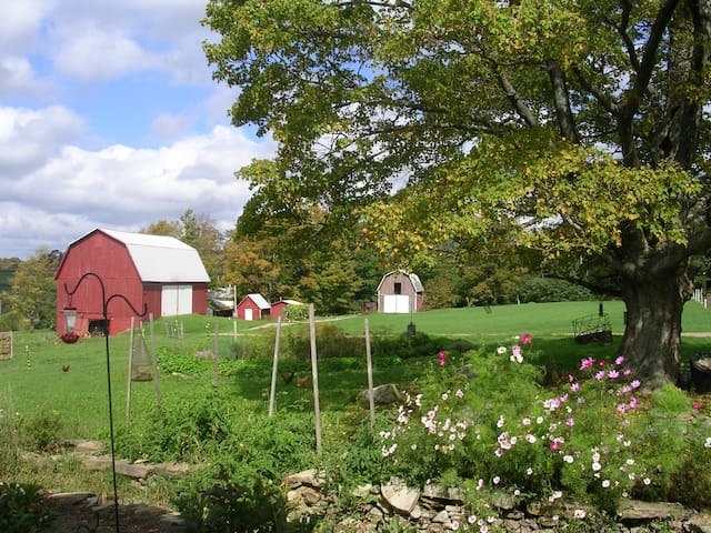 The barns (and usually, animals) are also visible from the house – or from the hammock under the tree in the yard.