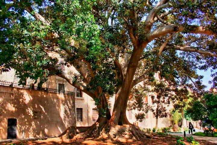 Garden Apartment, Palma de Majorca