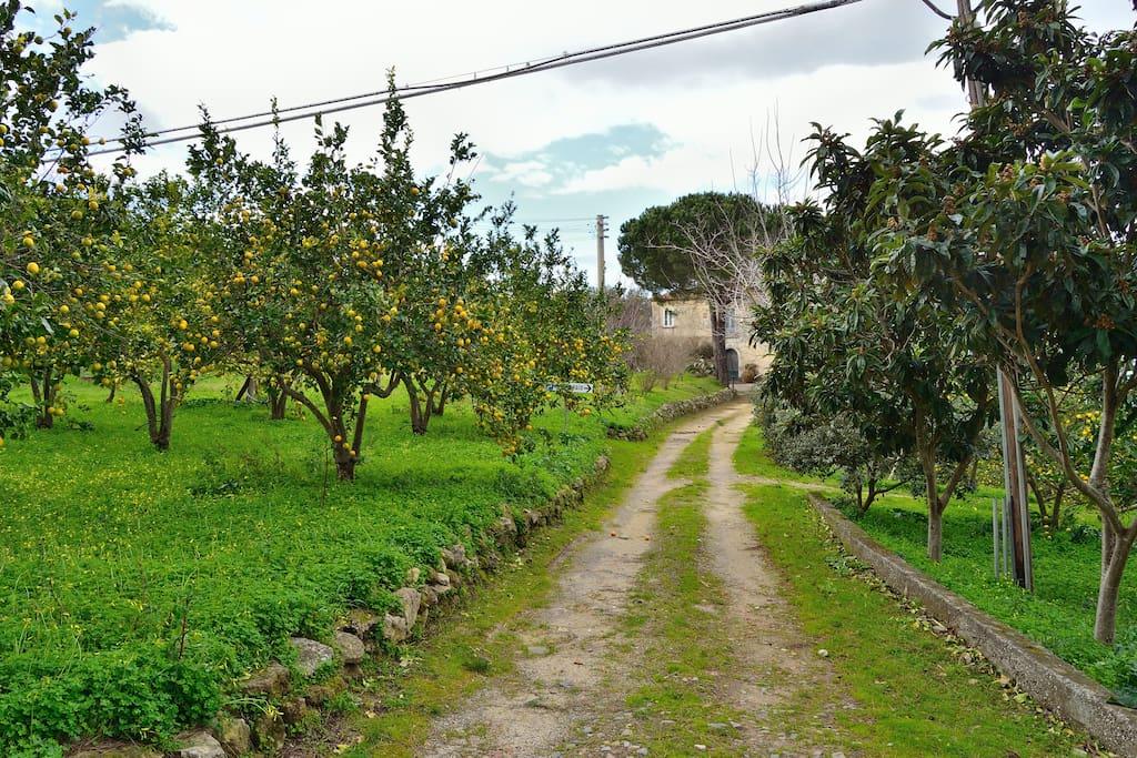 Il Viale ed il Limoneto