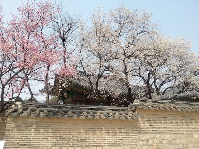 Spring of Changdeokgung Palace