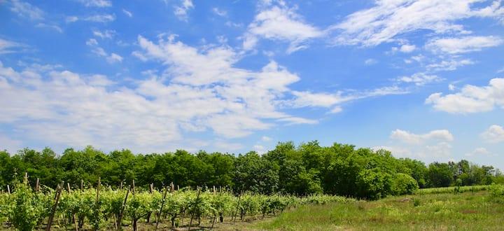 Villa Caramino_ Escape.Nature.Wine.&More!
