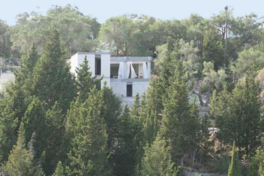 The house in the middle of olives trees and cypress