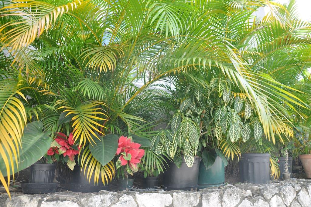 Outdoor vegetation
