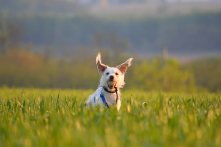 Dog Pension with training - Budapest - Lainnya