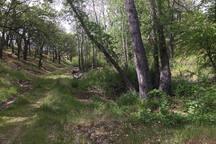 Walk to Bonney's Spring on Tygh Ridge Ranch.