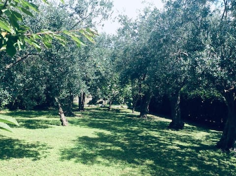 The garden with 19 olive trees where you can relax