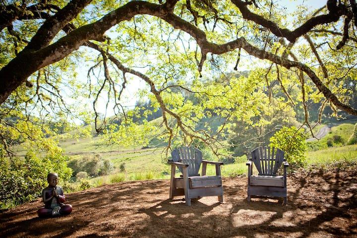 Picnic spot beneath the oaks