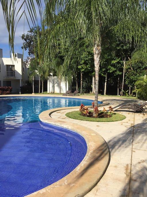 Pool in shared garden