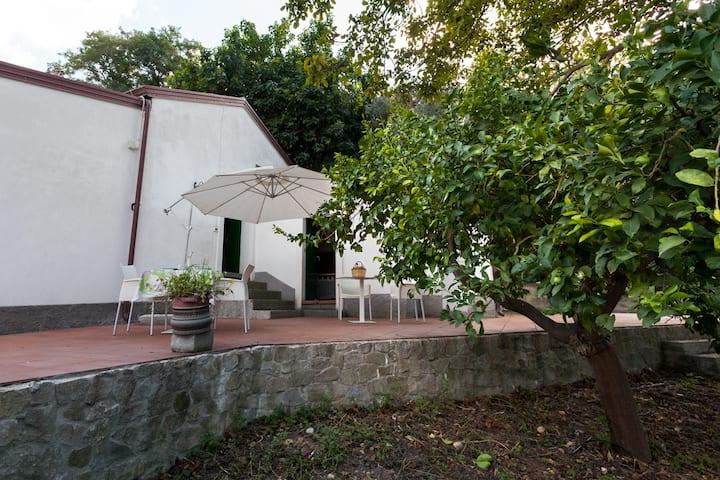 AGRICONTURA: CASA DEL BANANO