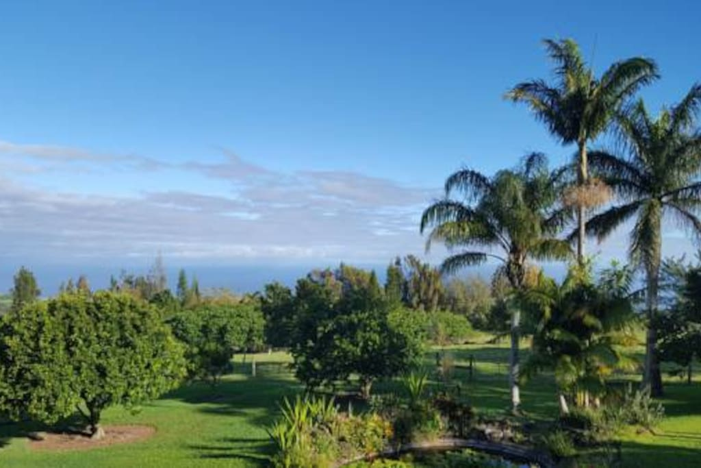 An abundance of fruit trees are located on the property for you