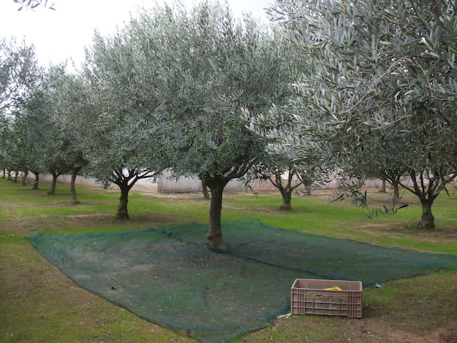 L'oliveraie - La Crau - Lejlighed