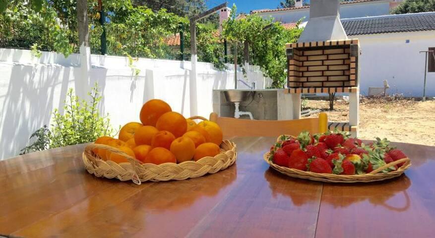 Amazing Country Villa - Azeitão | Arrábida - 8PAX
