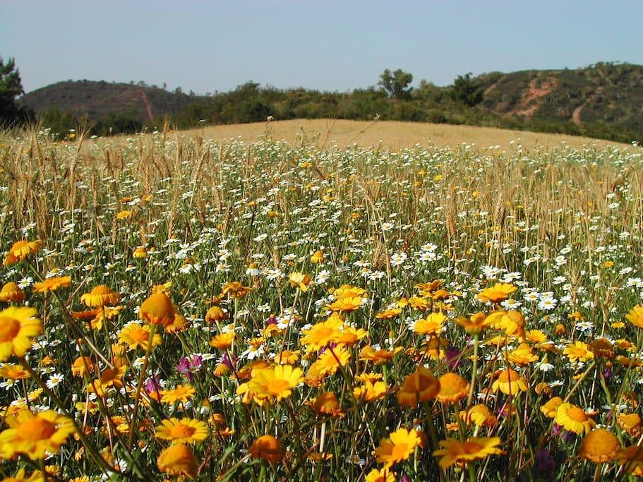 Odeceixe o campo na Primavera Spring countryside Odeceixe