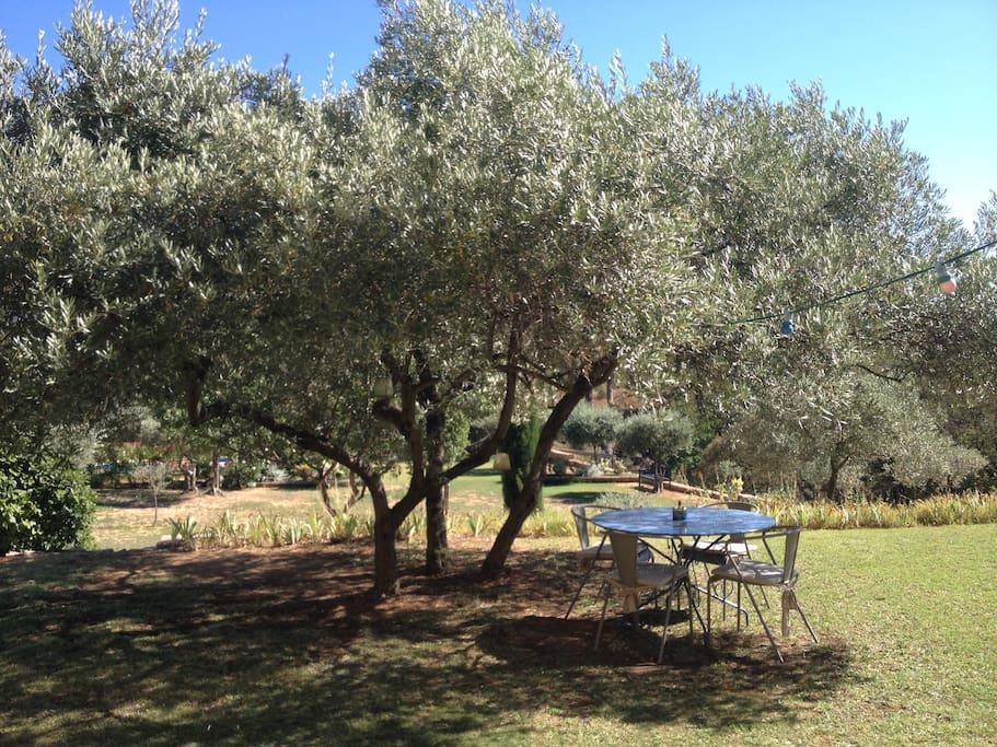 Coin repas sous l'olivier
