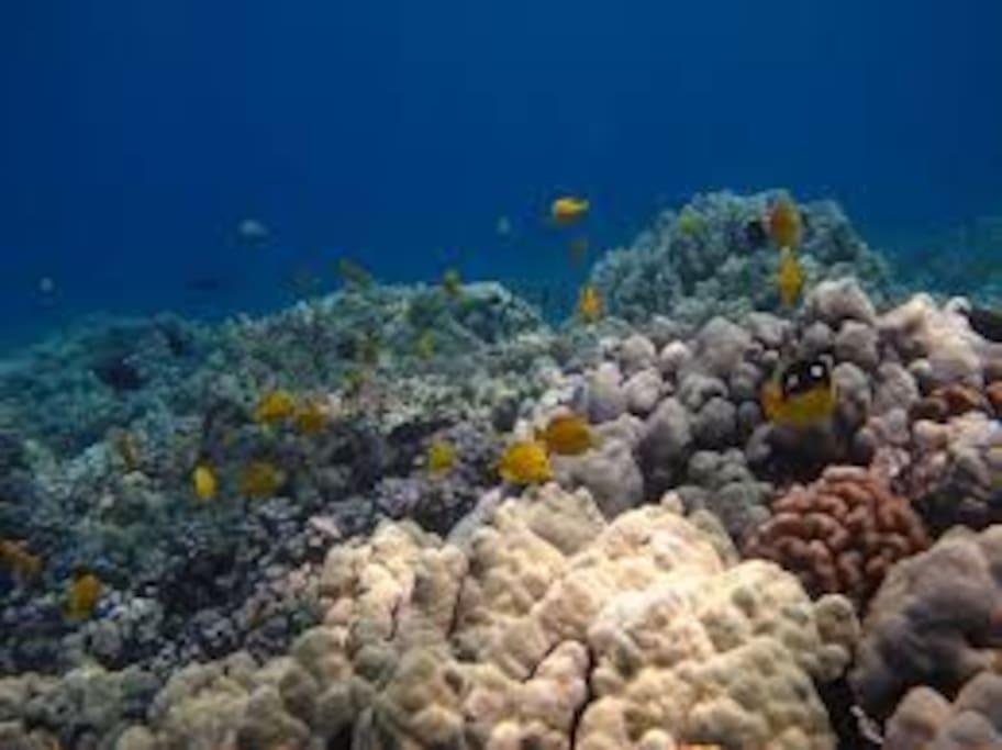 Culebra Reef