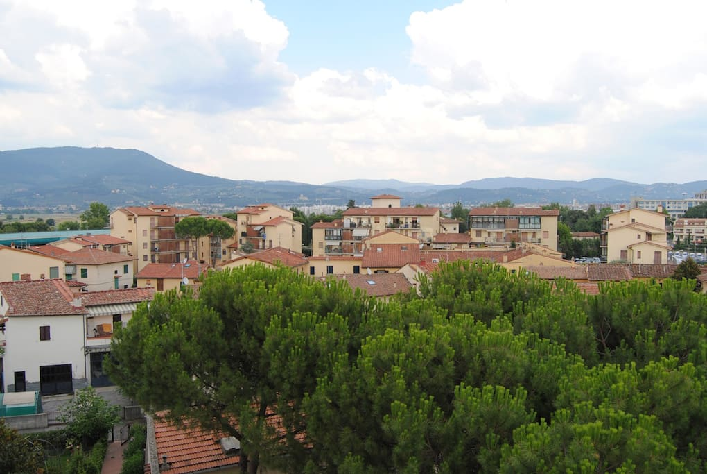 View from the balcony above the pine trees