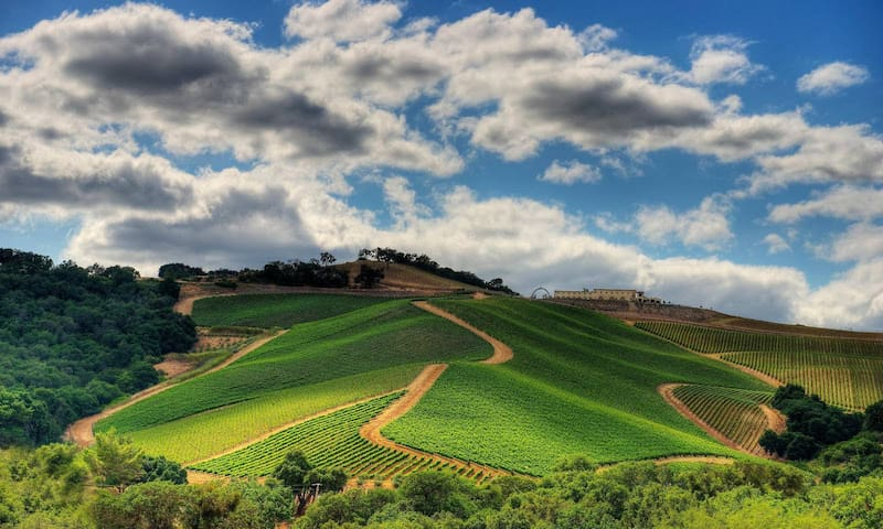 Paso Robles Wineries to Visit
