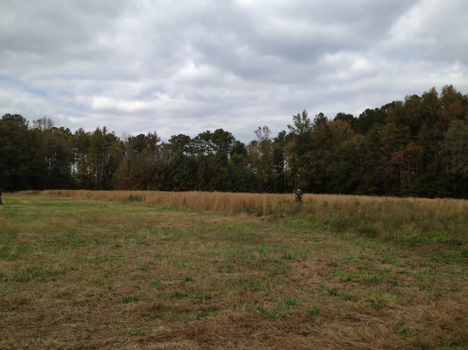 Remote hay field.