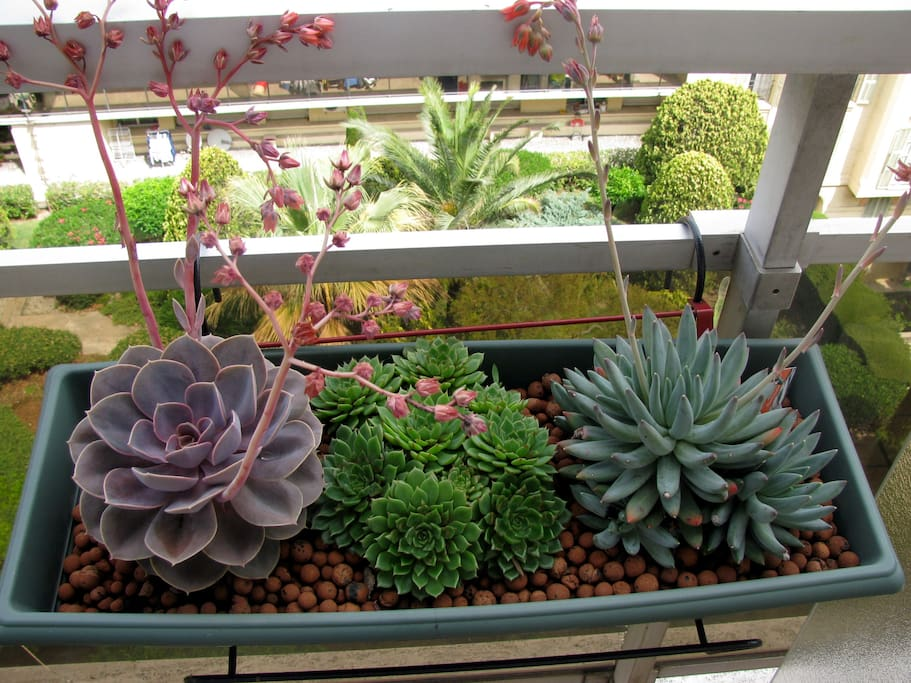 piante grasse sul balcone