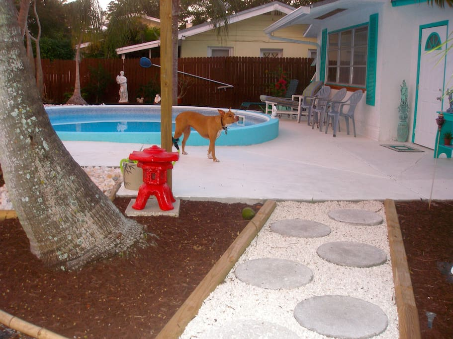 This is our friendly dog Hammy and a little path we made.  She will either be in her pen or in our house with us.
