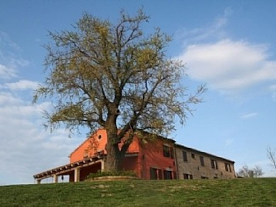 The Elm guarding the house