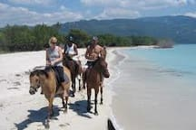 Horseback ride down the Beach