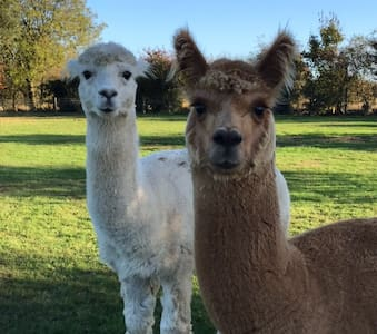 Comfortable & modern. Large garden with Alpacas