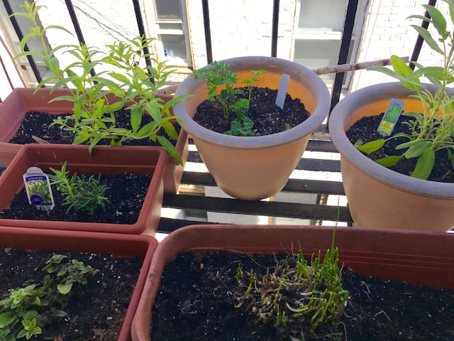 Herb garden off the kitchen to spice up your meals.