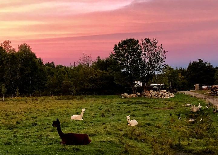 Gopher Broke Farm, a real Vermont homestead.