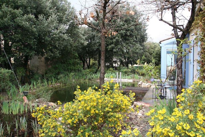 bassin à filtration par les plantes