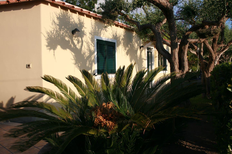 casa nel verde tra piante di  ulivi ,limoni, mandarini ed aranci