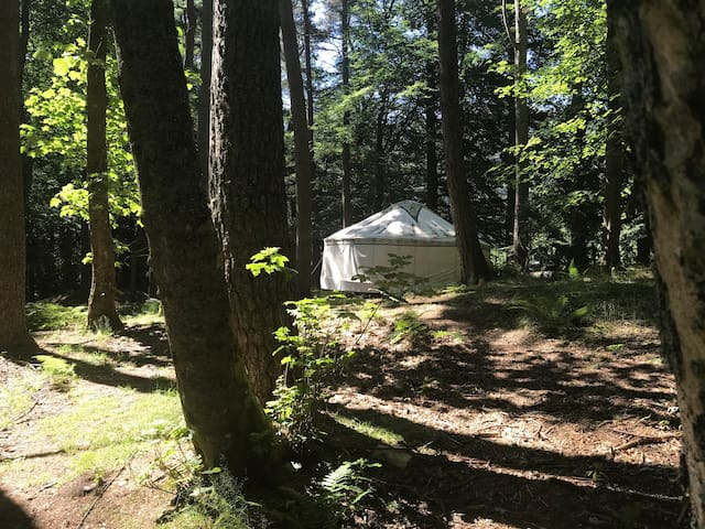 20' woodland yurt in Highland glen