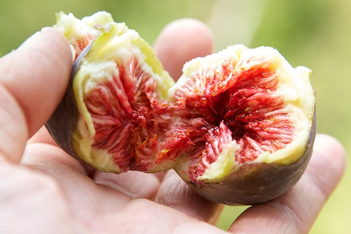 our organic september figs