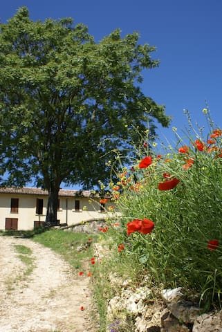 Enjoy your stay with us in Todi - Acquasparta
