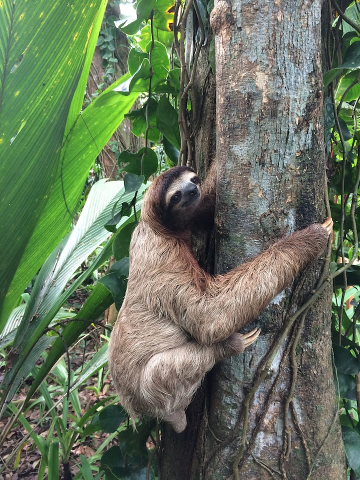 At Sloth Point