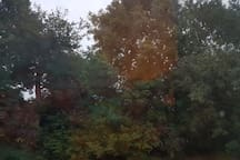 Out from your window you back onto the back garden. A beautiful view of the woodland trees and sky. Good for star gazers. You hear the beautiful birds and the rain patters on the woodlands - beautiful sounds if you love your nature.