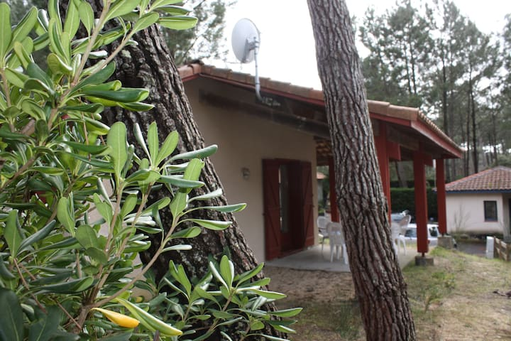 Villa at the heart of the pine