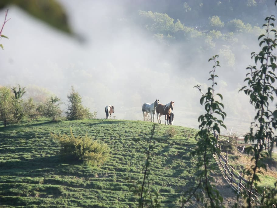 i nostri cavalli sulla collina