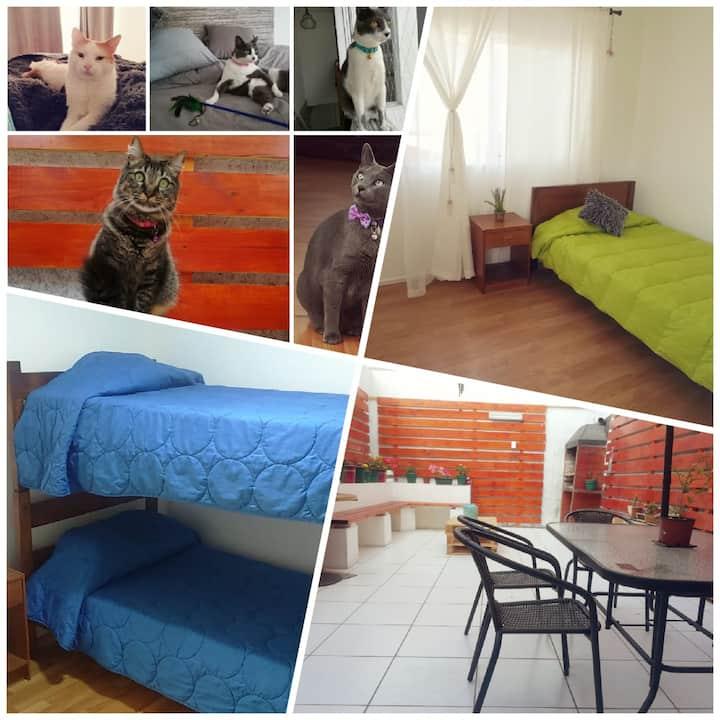 Cavancha Home 1