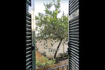 The courtyard. The lemon tree