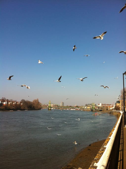Beautiful walk along the river to Hammersmith station, 2 mins from your home