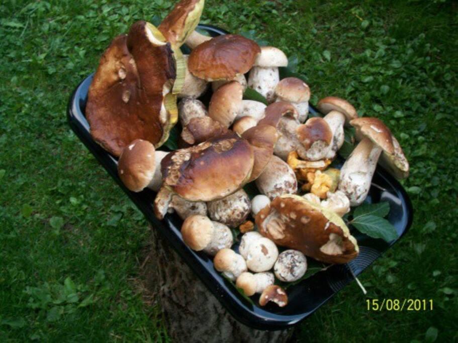 I Porcini, funghi tipici della zona