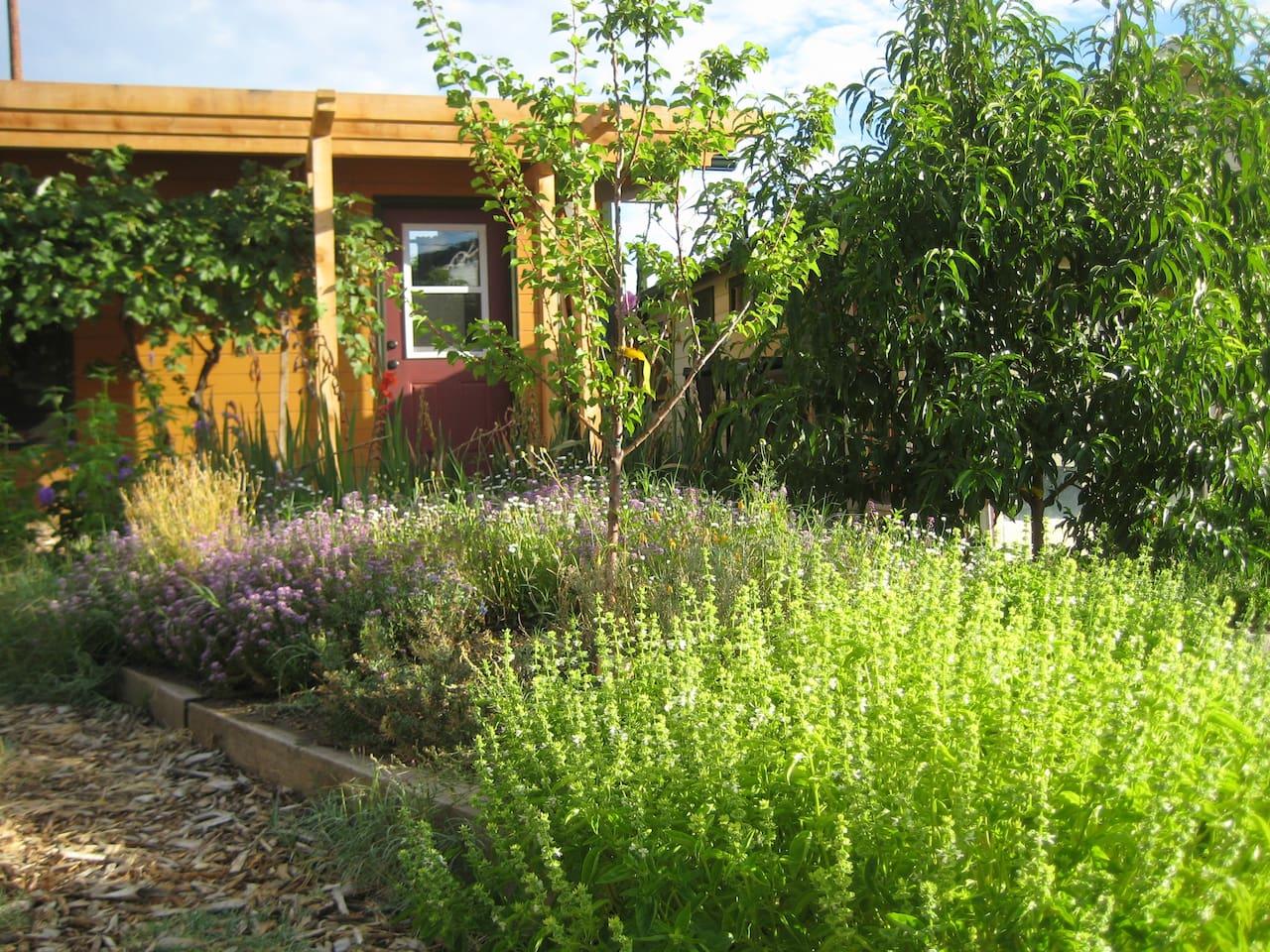 Cozy Garden Cottage & Walk Downtown
