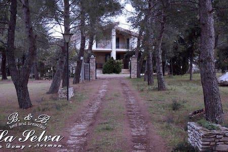 B&B La Selva - Norman&Domy Stanza 6 - Andria - Castel del Monte