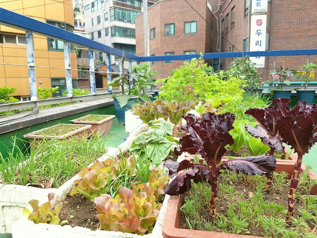 We grow vegetables for guest's BBQ :)